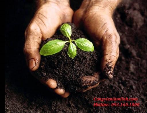 Xem ngày đẹp trồng cây trong năm