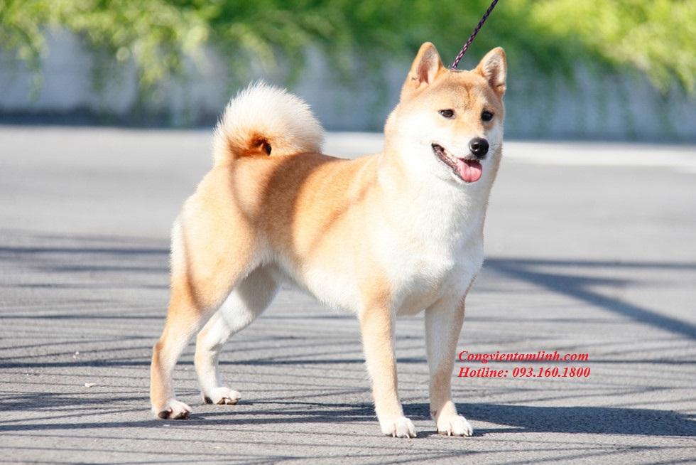 Xem Ngày Đẹp Nuôi Chó
